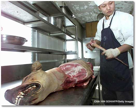 bush-meat-dog-carcass-beijing-2008