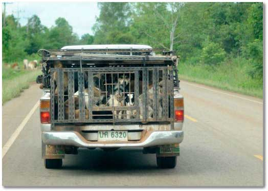 bush-meat-dogs-illegally-transported