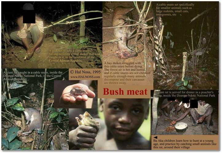 bush-meat-mural