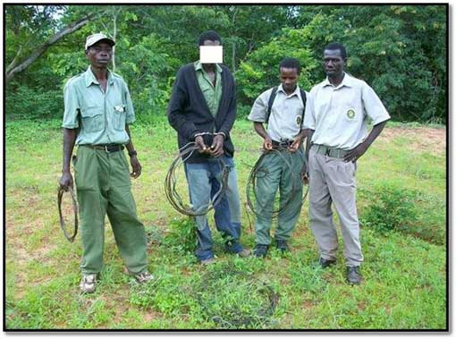 bush-meat-poacher-captured-with-wire-snares