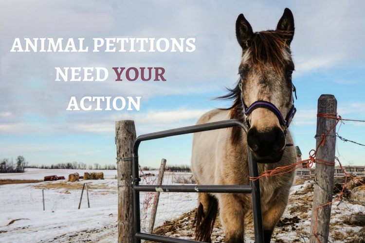 5-ANIMAL-PETITIONS-THAT-NEEDYOUR-ACTION1