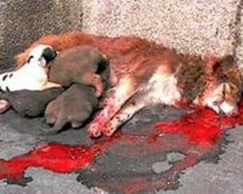 Dog-beaten-to-death-but-her-desperate-pups-still-try-to-suckle