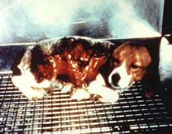 animal-experimentation-dog-torched-alive