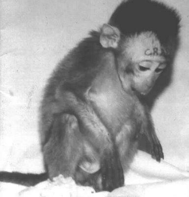 animal-experimentation-monkey-crap-tattoo