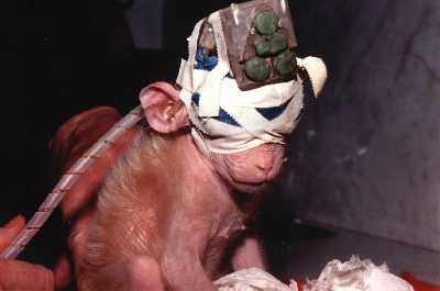 animal-experimentation-monkey-device