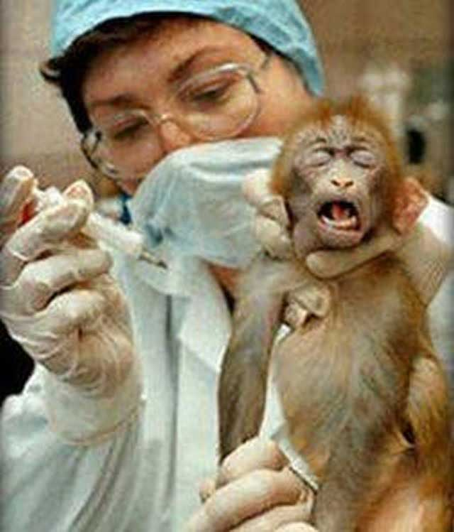 animal-experimentation-monkey-screaming-