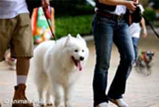 Fundraising-for-charity-sponsored-dog-walk-animalsasia-org