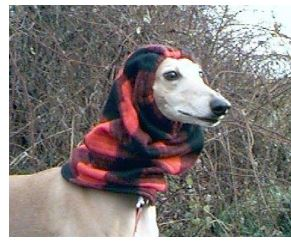 Make a snood for greyhound rescue