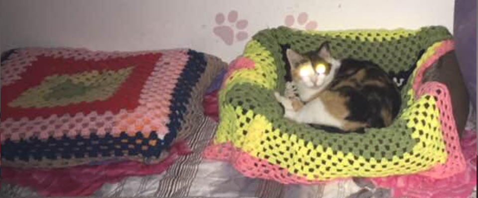 Saving Romanian Strays in need of knitted blankets for Romanian Rescues