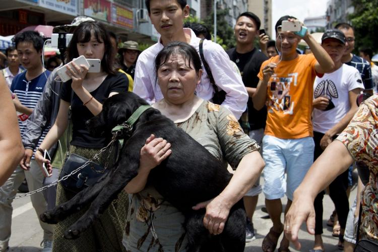 china-dog-meat-festival