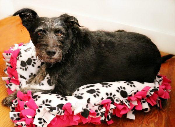 diy-no-sew-dog-bed-6--600x435