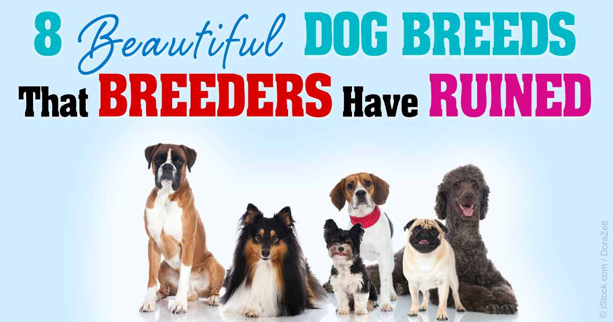 8-dog-breeds-breeders-ruined-fb