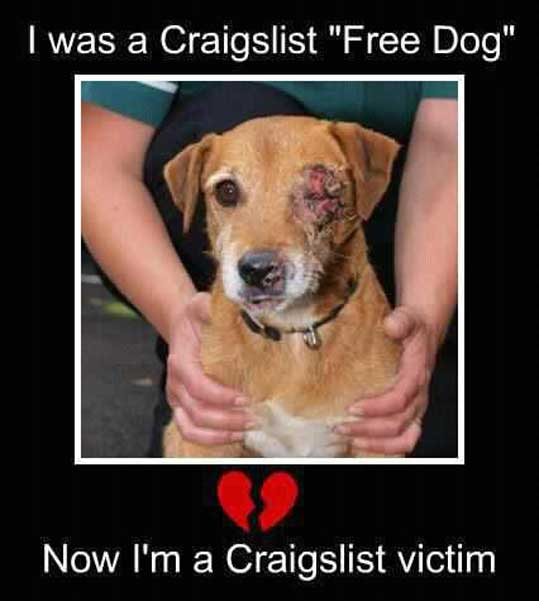 free-to-good-home-craigslist-abuse-victim