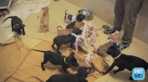 puppies-awaiting-adoption
