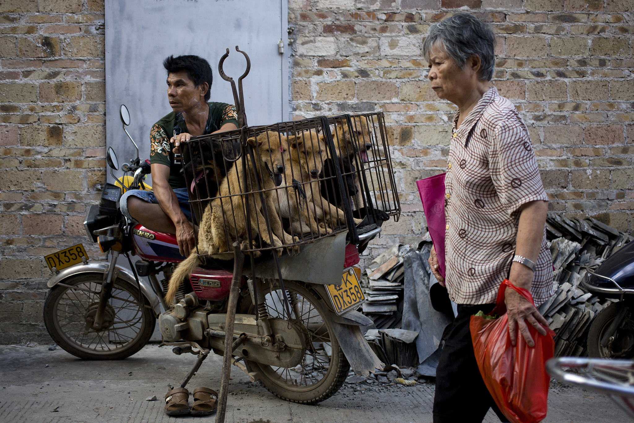 A woman walks past a dog vendor waits for buyers next to the dogs in a cage for sale at a market during a dog meat festival in Yulin in south China's Guangxi Zhuang Autonomous Region, Tuesday, June 21, 2016. Seeking to end what they call a cruel and unsanitary ritual, animal rights activists are working to end an annual dog meat feast in the southern Chinese town. (AP Photo/Andy Wong)