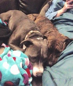 Monty and Sammie foster dogs