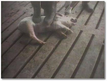 155a51afe1198ad785b6e45cbe168958--stop-animal-cruelty-sociopath