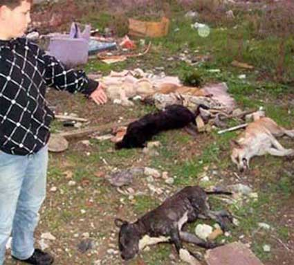 Animal-overpopulation-Control-Mass-Poisoning-Of-Dogs-slow-painful-death-internal-rupture