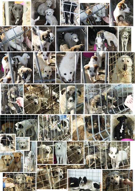 Animal-overpopulation-Romanian-dog-massacre-cruelty-abuse-massacred-overnight-in-rescue-shelter