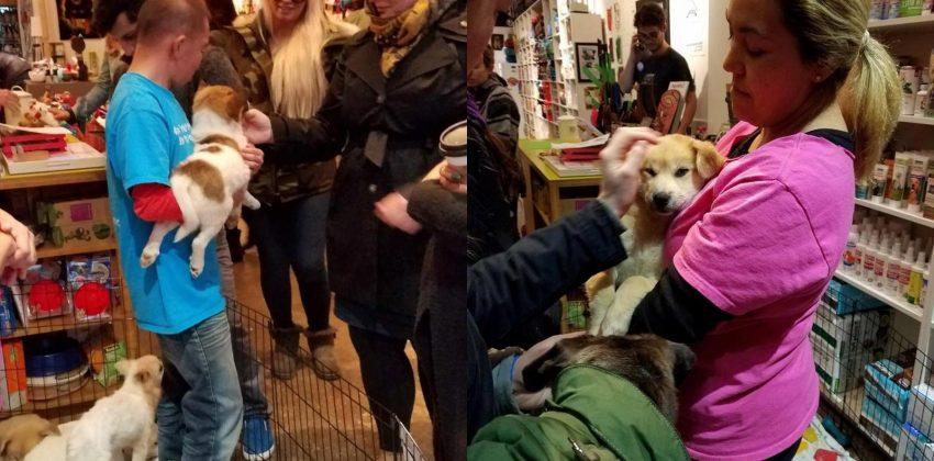 Jeju-Puppy-Adoption-Event-at-PS9-Pet-Store-1-850x420