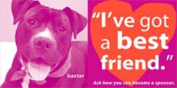sponsor a pet be its best friend