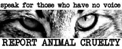 Sam_Jacobs_animal_cruelty.jpg400x162