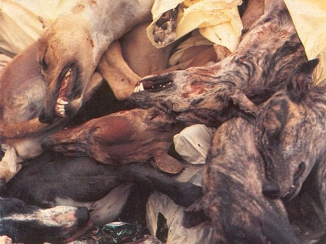 Stomach_churning_images_are_published_by_animal_protection