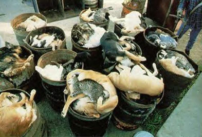 abandoned-animals-euthanised-in-bins
