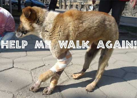animal-overpopulation-beaten-dragged-behind-car-legs-broken-left-to-die