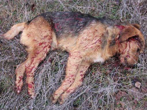 animal-overpopulation-dog-seen-shot-dead-serbia