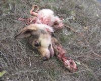 animal-overpopulation-moldova-cruelty