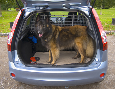 as-volunteertransportdog