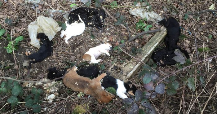 bodies-of-tiny-puppies-littering-a-verge-by-the-side-of-a-road