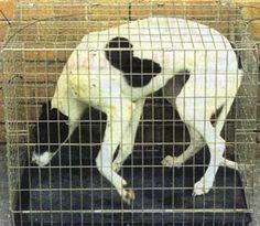 dog-cages-dog-abuse