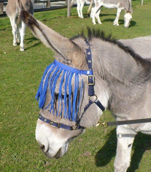 donkeyflymask