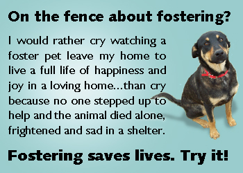 fostering saves pets lives