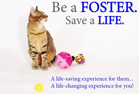 foster_a cat_