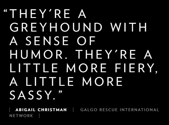 Galgo Quote