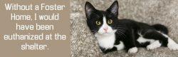 foster a pet save a life