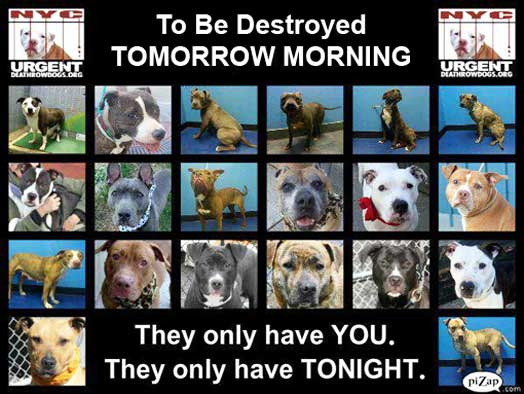 pet-abandonment-gallery-pictures-of-dogs-to-be-put-to-sleep-destroyed-death-killed