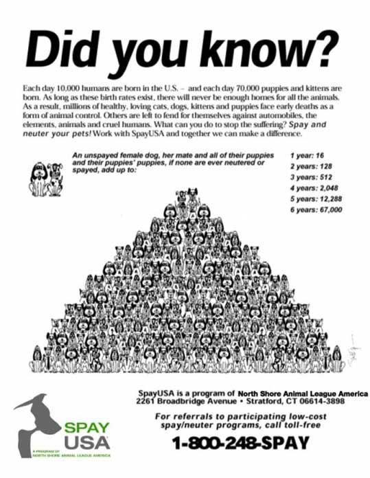 pet-abandonment-spay-and-neuter-facts-information