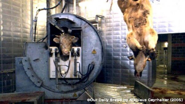slaughterhouse-pic-pneumatic-reverse-box-602x339