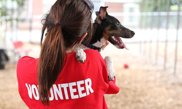 volunteer-600x360