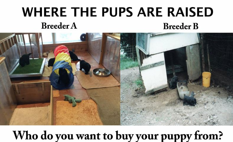 where-the-pups-are-raised
