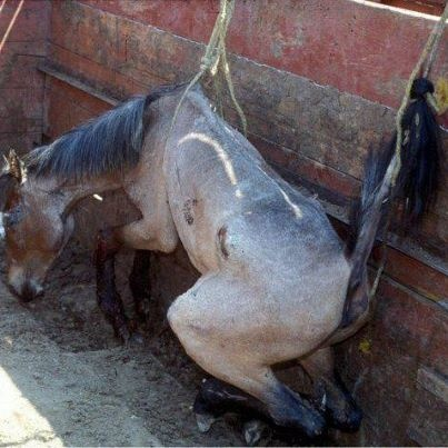 22afa18bea6bfae86c6c2a04244161f7--horse-meat-stop-animal-cruelty