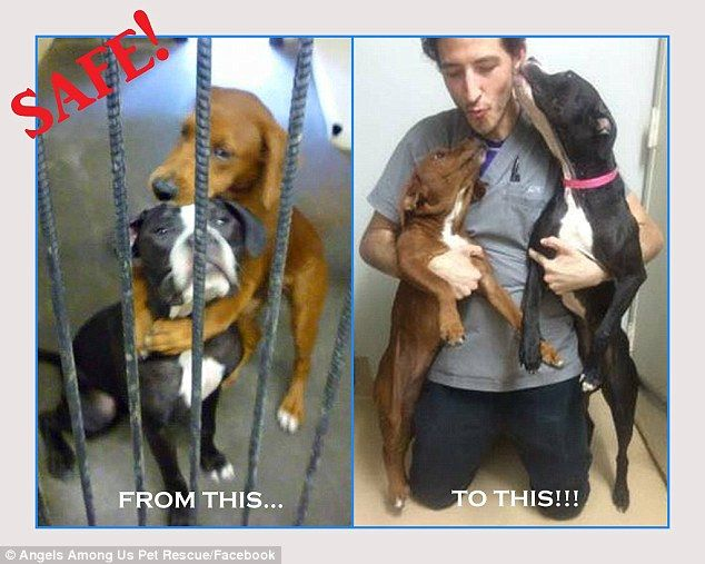 f21f75a4e95682d77610aa19625c1016--shelter-dogs-animal-shelter
