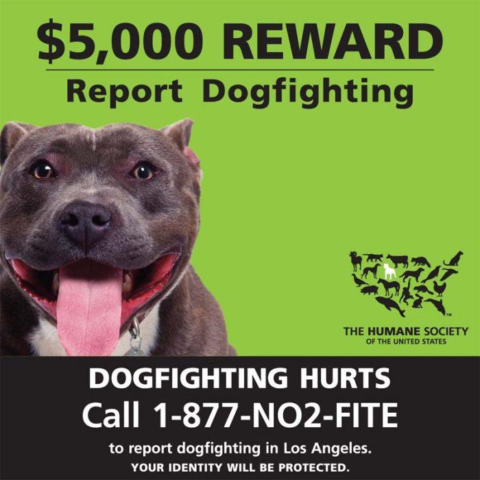DogFighting_21x21