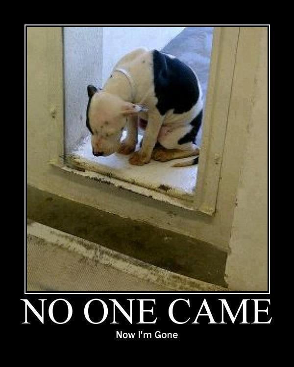 sad pound dog