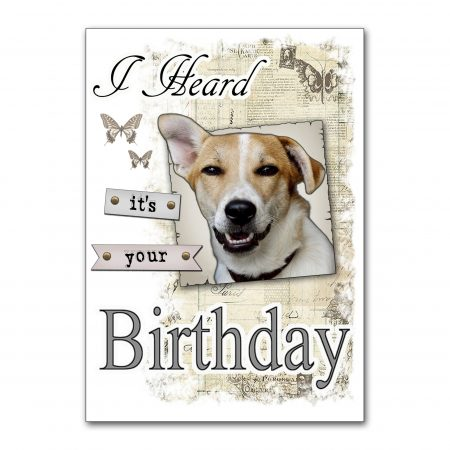 love-romanian-underdogs-heard-its-your-birthday-will