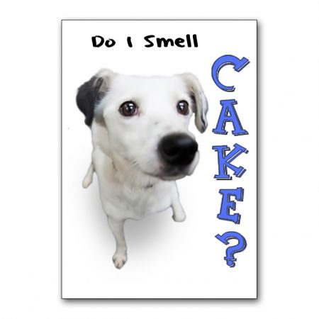 love-underdogs-i-smell-cake